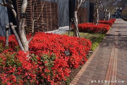 近所のお花②