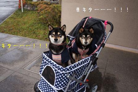 リハビリ散歩①