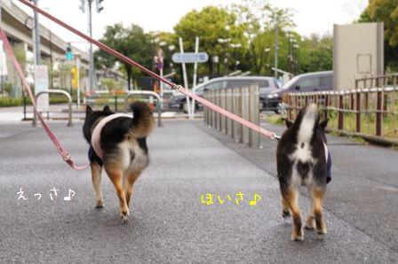 リハビリ散歩③