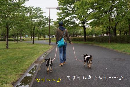 リハビリ散歩④