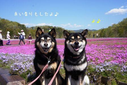 芝さくら公園②