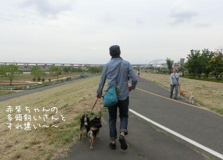 荒川土手散歩⑥