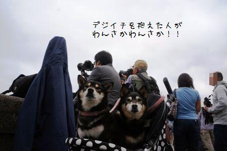 東京ほたる