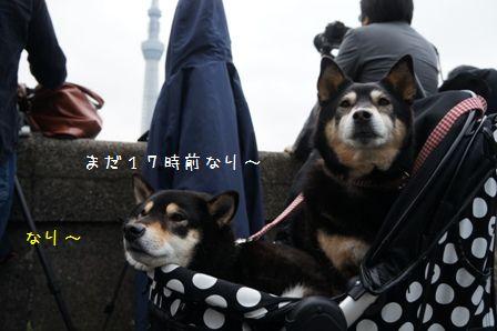 東京ほたる①