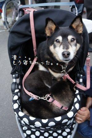 東京ほたる④