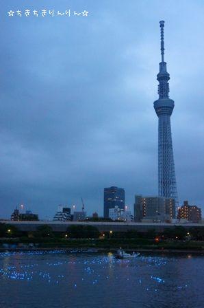 東京ほたる⑫