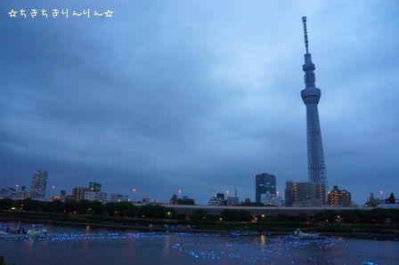 東京ほたる⑬