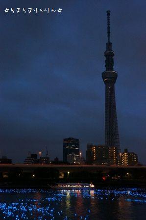 東京ほたる⑮
