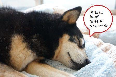 ちきさん寝顔