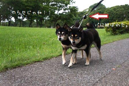 水元公園⑥