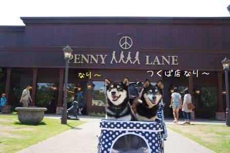 PENNY LANEつくば