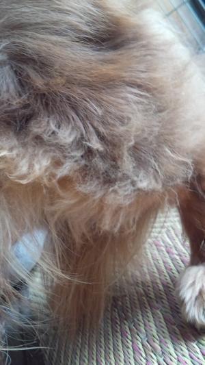 メータンの毛
