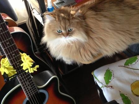 レオンとギター (2)