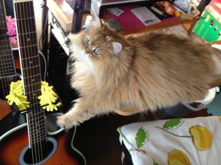 レオンとギター (3)