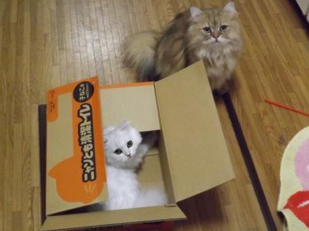 箱だ~ (2)