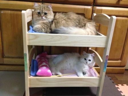 二段ベッド (4)