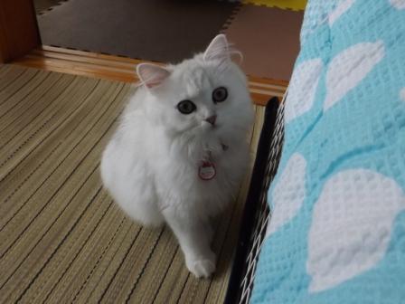 マリーちゃん (4)