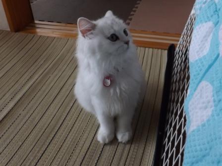 マリーちゃん (3)