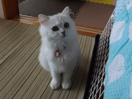 マリーちゃん (2)