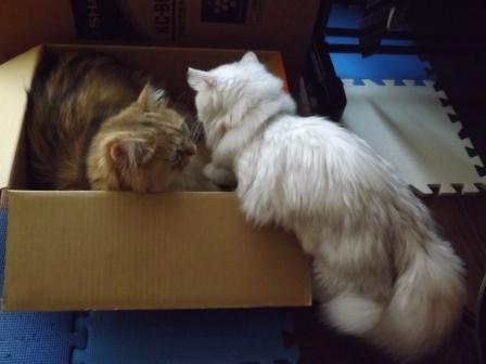 レオンとマリー (4)
