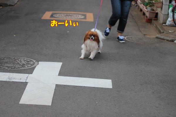 0602お散歩2