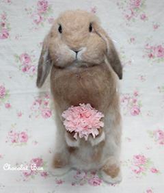 ゆずぽんちゃん母の日♪blog