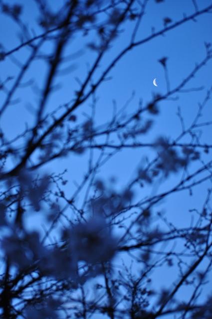 桜とコラボ
