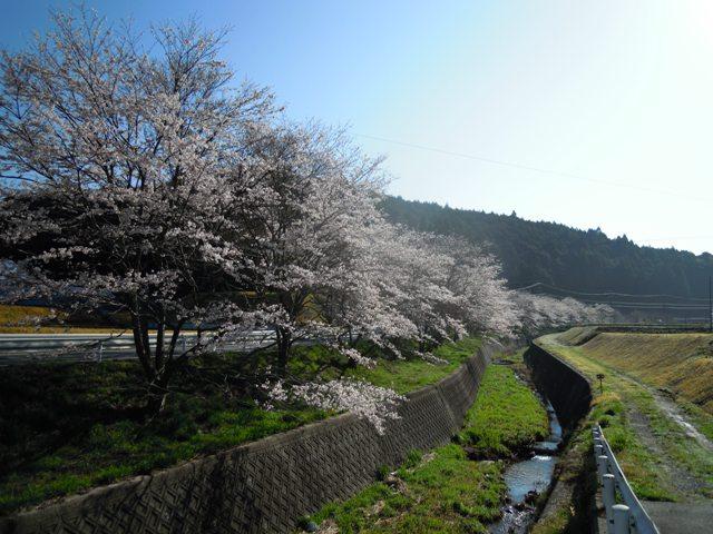 青空と桜ってきれい☆
