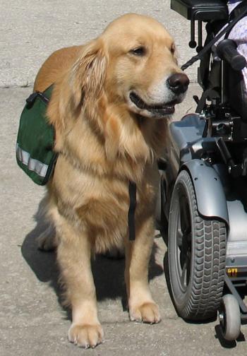 service-dog_convert_20130720140222.jpg