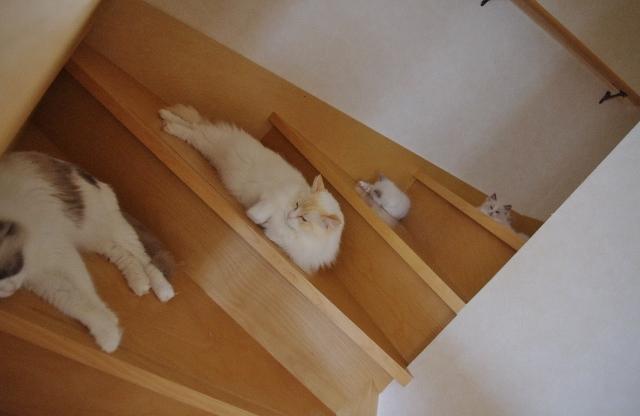 階段IMGP2639