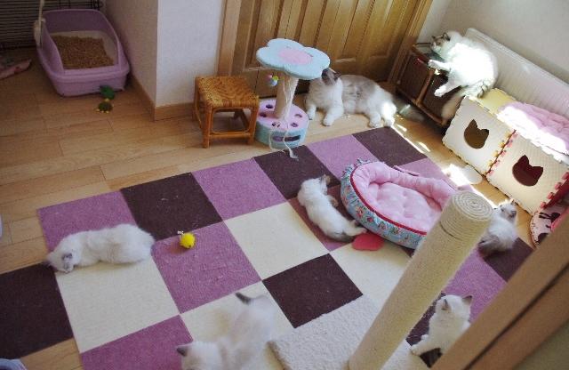 子猫部屋IMGP2968