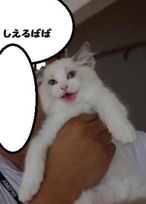 ユキIMGP4841