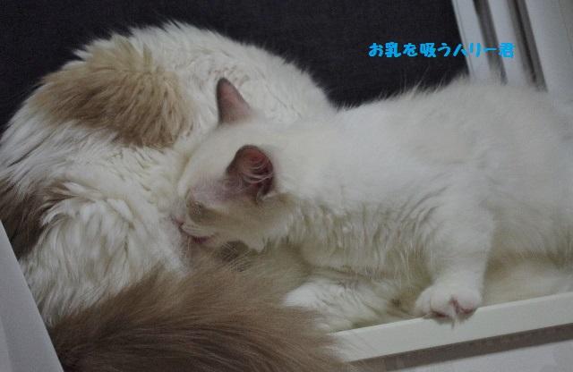 お乳IMGP5326