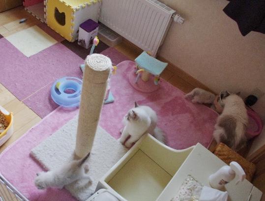子猫部屋IMGP1383