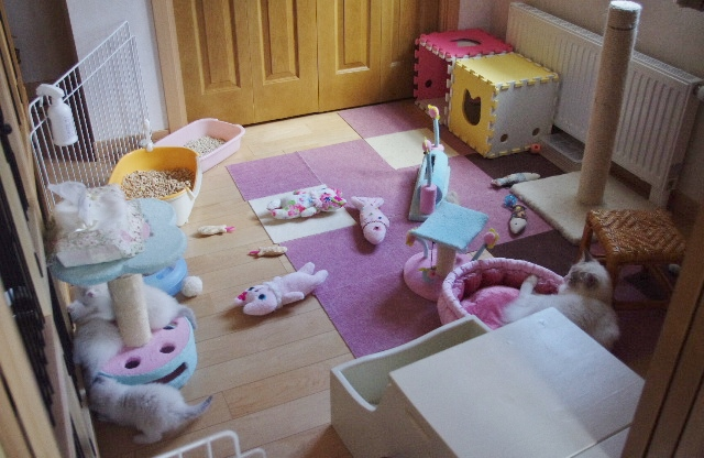 子猫部屋IMGP1678