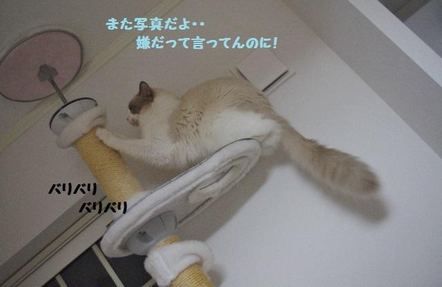 CCIMGP8985.jpg