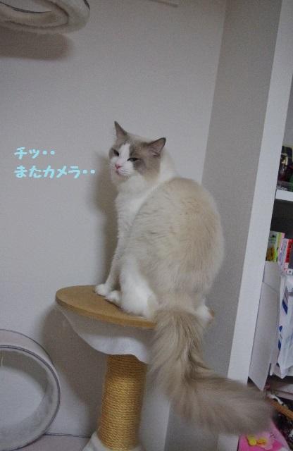 CCIMGP8987.jpg