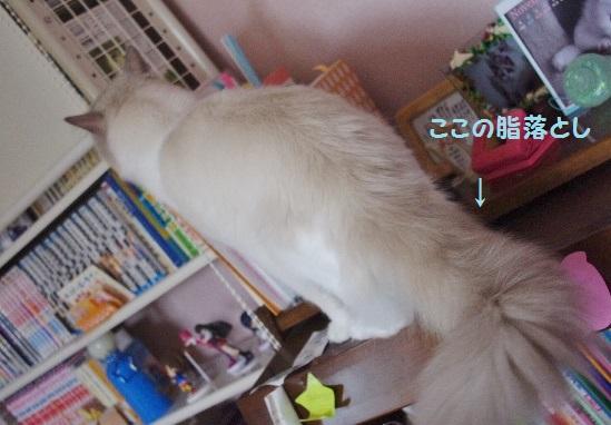 NNIMGP9748.jpg