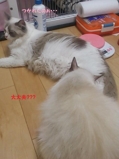 mini_131023_0047.jpg