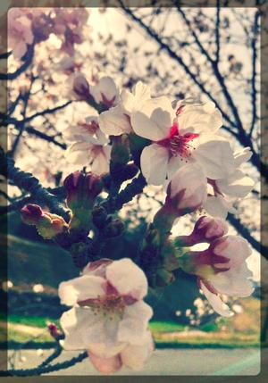 th_写真 2013-04-01 15 39 21_Fotor_20130402