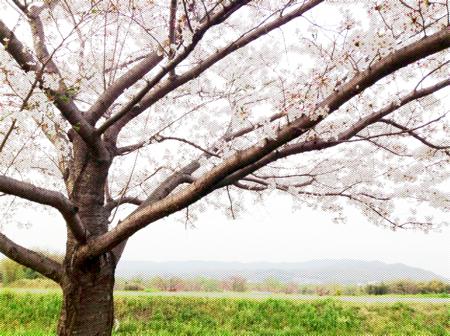 th_写真 2013-04-05 18 04 21