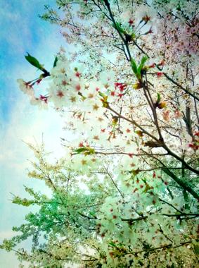 th_写真 2013-04-05 21 47 30