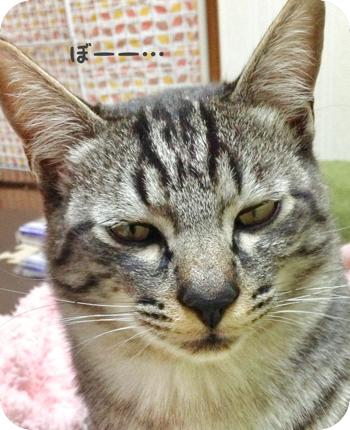 th_角丸パンチ ~ 写真 2013-04-13 14 45 56