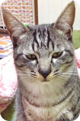 th_角丸パンチ ~ 写真 2013-04-12 18 46 13