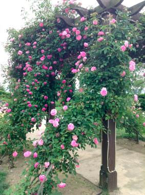 th_写真 2013-05-27 15 13 26