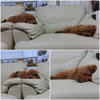 疲れて寝ちゃった!