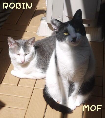 robimof1.jpg