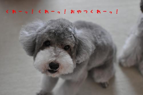 DSC_0724 くれーっ