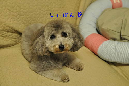 DSC_0346 しょぼん