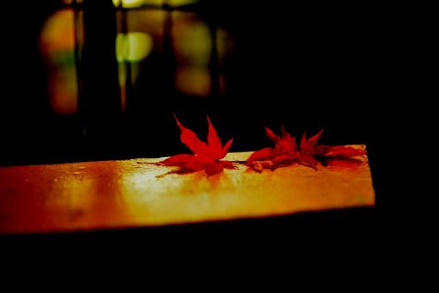 秋の欠片 2